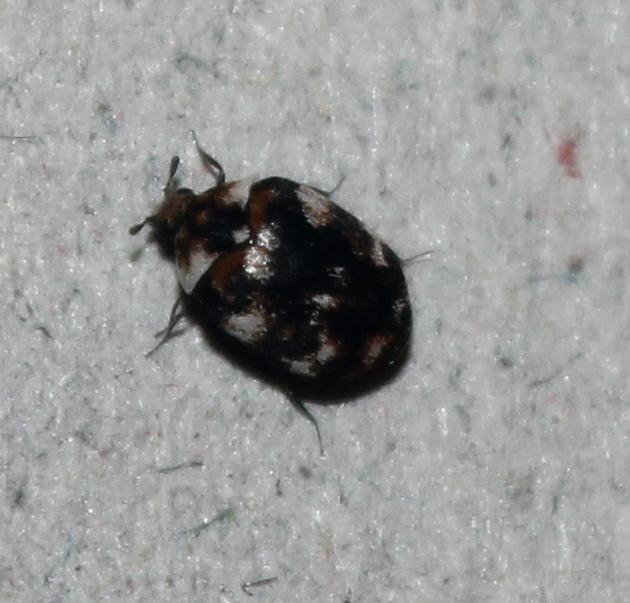 Kitchen Bug Infestation Uk